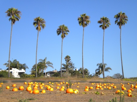SoCal Autumn Copyright: Eaton Alive 2009